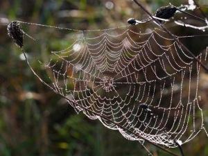 spider web+
